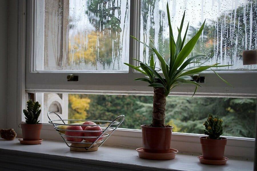 Plants and Fresh Air