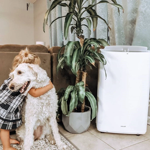 Portable Air Conditioner & Dogs