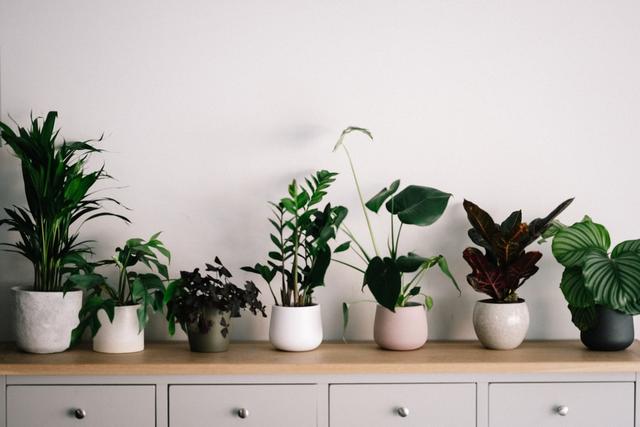 Green Plants in White Ceramic Pots